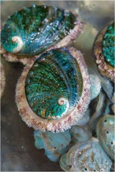 Audrey, 9/17: These are abalone shells. I love when pictures like this show how intricate and beautiful pieces of art tend to pop up in nature.