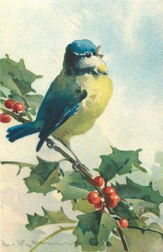 Little blue bird on holly branch ~ Catherine Klein