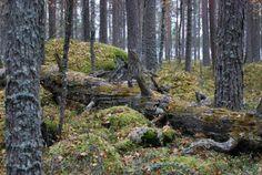 National park Salamajärvi.   Ikkuna Suomen Luontoon