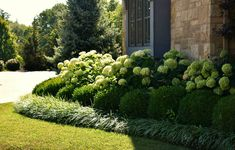 Hydrangeas bordered by boxwoods and liriope lawrencelandscape gallery landscaping hydrangea boxwood liriope plants is part of Hydrangea landscaping - Cheap Landscaping Ideas, Front House Landscaping, Hydrangea Landscaping, Farmhouse Landscaping, Low Maintenance Landscaping, Front Yard Landscaping, Mulch Landscaping, Fence Ideas, Front Yard Hedges