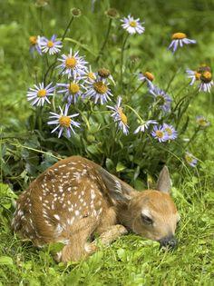 Dozing Bambie