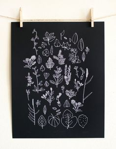 "Local Nature Poster. This is a limited edition poster of Leah's ""Local Nature"" drawings inspired by little bits of nature collected from walks around her neighborhood. It was screen printed in white ink on 80 lb matte black paper by Bearded Lady screen printers here in Austin. - 16"" x 20"" - Limited edition of 250 - Numbered and initialed on the bottom This poster will be rolled and shipped in a tube mailer to ensure it arrives safely."