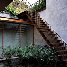 Innenhof-gestalten-Gartenteich-Wasserpflanzen-Seerose-Schilf-Holztreppe-Dachterrasse