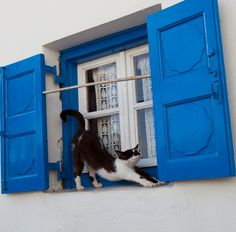 Cat in the window | Mykonos, Greece #travelcat