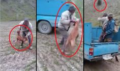 PETITION | FEB 2016 - This video shows a heartless man beating and inhumanely destroying a hunting dog with a shovel.The man is seen grabbing the dog by his neck, slamming the animal...