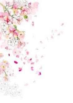 宁馨郁金香采集到陌上花开缓缓归