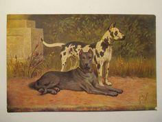 alte Ansichtskarte  Tier Hund, Dog , Dogge  um 1910