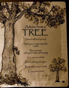 ADVICE FROM A TREE: Stand tall and proud.Sink your roots into the earth.Be content with your natural beauty.Go out on a limb.Drink plenty of water.Remember your roots.Enjoy the view The Words, Enjoy The Ride, Tree Quotes, Nature Quotes, Forest Quotes, Good Advice, Just In Case, Quotes To Live By, Favorite Quotes