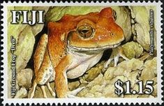 Stamp: Fiji Ground Frog (Platymantis vitianis) (Fiji) (Land Frogs of Fiji - Fiji. Fiji Culture, Amphibians, Reptiles, Postage Stamps, History, Wild Animals, Frogs, Embroidery, Sewing