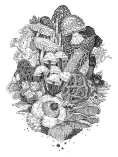 Beautifully detailed graphite/ink drawings by Portland-based illustrator/designer Zoe Keller. Keller graduated from the Maryland Institute College of Art in Baltimore, Maryland. See more images below. Zoe Keller's Website Mushroom Drawing, Mushroom Art, Art And Illustration, Motifs Organiques, Art Sketches, Art Drawings, Drawing Art, Coloring Books, Coloring Pages