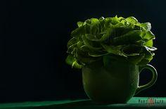 Alface Mini - Verde - Foto: Marion Rupp