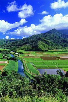 日本の夏の里山風景