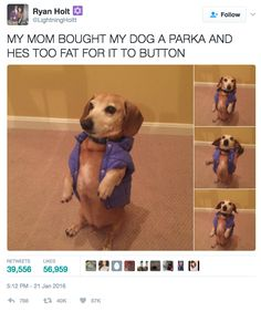 This lil' guy in his ill-fitting vest… | 17 Tweets About Pets That Will Make You Inexplicably Happy