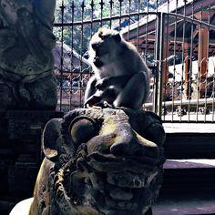 Meet the king  Some monkey on monkey forest at #ubud #bali  #travel #backpacker #indonesia