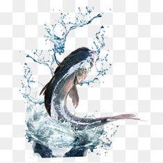 물과 물고기,화련어,생선,점프 물고기,물고기,물고기 한 마리.,화련어 Best Camera For Photography, Lisbeth Zwerger, Photoshop Tips, Whale, Sketch, Concept, Fresh, Tatoo, Psychedelic Drawings