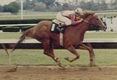Silent Account(1983)(Filly) Private Account- Ciao By Silent Screen. 5x4 To Nasrullah. 37 Starts 10 Wins 5 Seconds 2 Thirds. $480,475. Won Albiciades S(G2), Baton Twiler S, 2nd Selima S(G1), Genuine Risk S(G3), Sarsar S, Spicy Living S, 3rd Imperial Hill S.