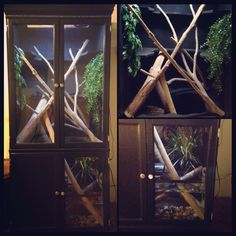 My DIY Chinese water dragon enclosure made from a craigslist cabinet! Chinese Water Dragon, Reptiles, Lizards, Crested Gecko, Tiny World, Pet Cage, Reptile Enclosure, Vivarium, Snake Tanks