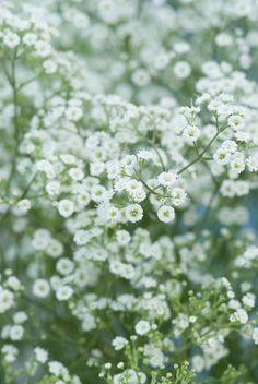 The perennials top 10 of picking flowers - GroenVandaag Balcony Garden, Garden Beds, Garden Plants, Green Garden, Lawn Care, Flower Beds, Garden Planning, Garden Inspiration, Perennials