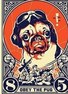 All obey the pug