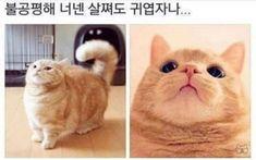 Cute Baby Animals, Funny Moments, Cute Babies, Dog Cat, Kittens, Hilarious, Jokes, Kawaii, Lol