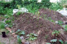 Hügelbeet im GleisBeet Organic Farming, Stepping Stones, Outdoor Decor, Plants, Pictures, Stair Risers, Organic Gardening, Plant, Planets