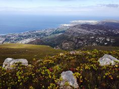 #overstrand #Overberg #Hermanus This was on our hike this morning. 23 Mar 2014