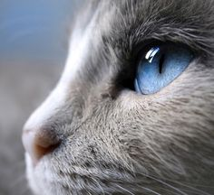 if you look closely, the reflection in it's eye is of a cat....either itself or another one?
