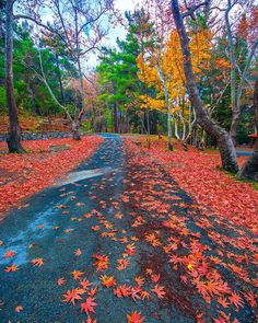 Troodos, Cyprus🍁 Have a great week😊 - kyrenian Great Week, Free In, Facebook Image, Cyprus, Along The Way, Daydream, Sidewalk, Country Roads, The Incredibles