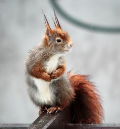 squirrel by Schnee Glöckchen on 500px