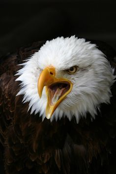 """The Eagle says, """"No more seditious shutdown shenanigans from Teabaggers! Do your job and pay our bills!"""""""