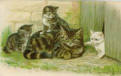 Cat & her kittens