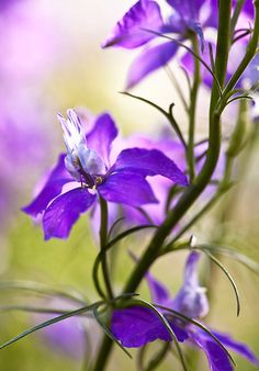 obviously, I love all purple flowers...