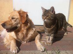 Pescara randagismo canino e felino: la replica di Diodati