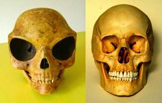 UFO mania: Does The Sealand Skull Prove Aliens Visited Earth?