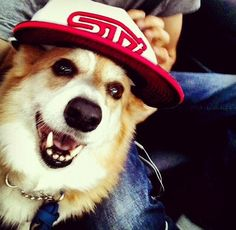 Buddy has dog tested and dog approved Subaru & his STI hat. Thanks for the #FurryFanPhotoFriday @theebeethoven11.  Follow #FurryFanPhotoFriday on our Instagram - @subaru_usa
