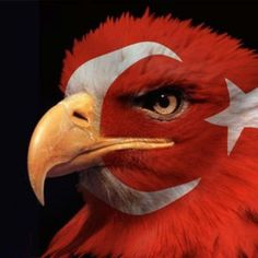 Military Hair, Sharpie Tattoos, Cyrus The Great, Wolf Wallpaper, Caligraphy, Bellisima, Bald Eagle, Istanbul, Bird