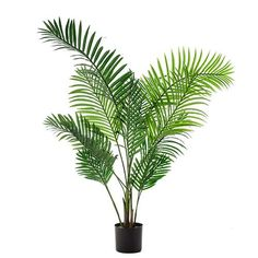 Areca Palm Potted Plant