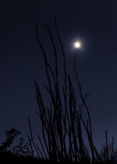 Ocotillo Night.  © Rick Burress, www.artistec.com
