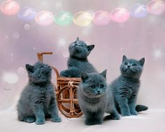 Image Animated-Cats hosted in ImgBB Cute Kittens, Beautiful Kittens, Cats And Kittens, Friendship Day Greetings, Holi Greetings, Ramadan Greetings, Dussehra Greetings, Horse Animation, Kitten Wallpaper