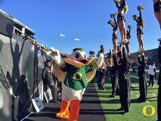 College Cheerleading, University Of Oregon, Oregon Ducks, World Famous, Real Life, Football, Soccer, Futbol, American Football