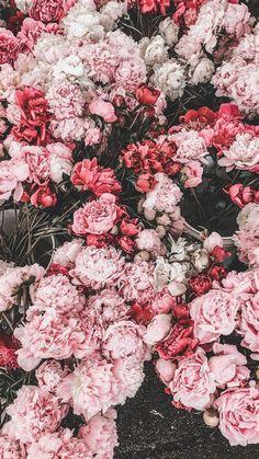 Flower Phone Wallpaper, Pastel Wallpaper, Nature Wallpaper, Aesthetic Drawing, Flower Aesthetic, Aesthetic Gif, Flower Backgrounds, Wallpaper Backgrounds, Aesthetic Iphone Wallpaper