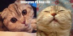 Instagram vs real life - http://cutecatshq.com/cats/instagram-vs-real-life-3/