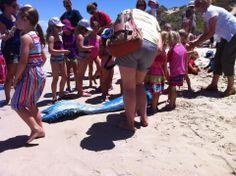 Mermaid Art, Perth, Amelia, Mermaids, Her Hair, Summer Time, Burns, Swimming, Magazine