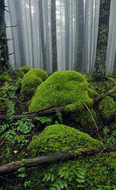 Mossy Foggy Forest by ~hikester