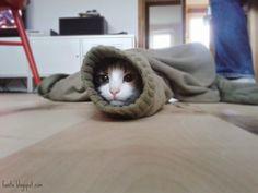 Kitten in a sleeve