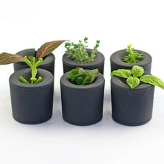 Rootcup Gray Set Of 6