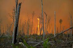 Cette photo a été prise dans l'Etat de Virginie aux Etats-Unis par un pompier sur place. Les tourbillons de flamme ou tornade de feu sont le résultat de vents tournoyants au coeur des incendies. Un effet de cheminée se forme créant ces colonnes de feu impressionnantes.
