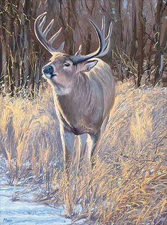 Whitetail Deer Buck Paintings - DopePicz