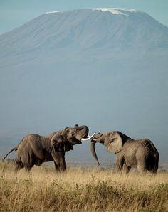 Kilimanjaro from Amboseli National Park, Kenya by 30byThirty. #TPbest