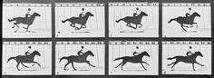 Eadweard Muybridge: Defining Modernities    Lucy Mutch - The Horse in Motion © Kingston Museum and Heritage Service, 2010